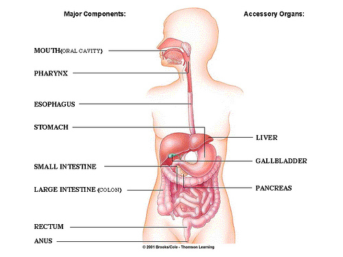 Irritable Bowel System and Bowel Diseases